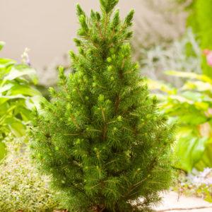 Питомник растений